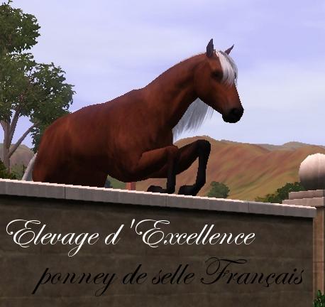 Le poney de selle Français dans poney de selle français screenshot-18
