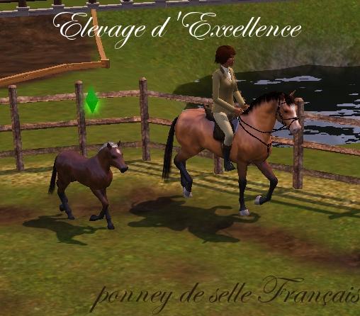 Celeste dans poney de selle français screenshot-21