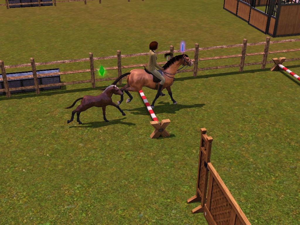 screenshot-22 dans poney de selle français