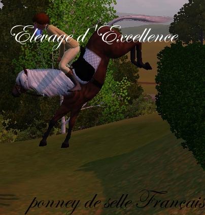 Eagle dans poney de selle français screenshot-24